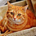 猫の糞(フン)対策|糞害・臭い・猫よけ対策まとめ